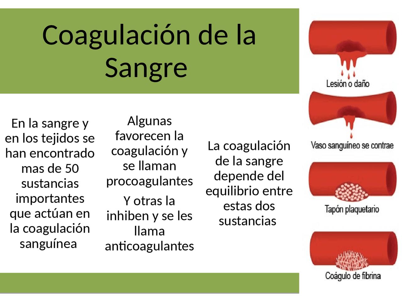 Coagulacion de la sangre - Docsity