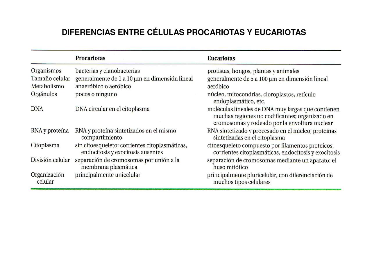 Diferencias Entre Eucariotas Y Procariotas Docsity