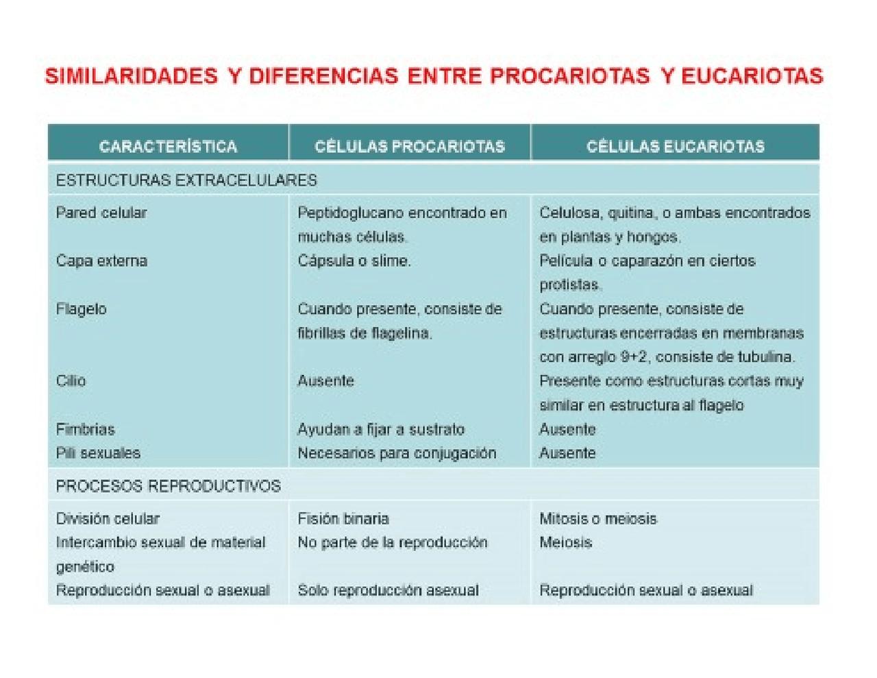 Diferencia Y Semejanzas Entre Celula Eucariota Y Procariota Cuadro Comparativo