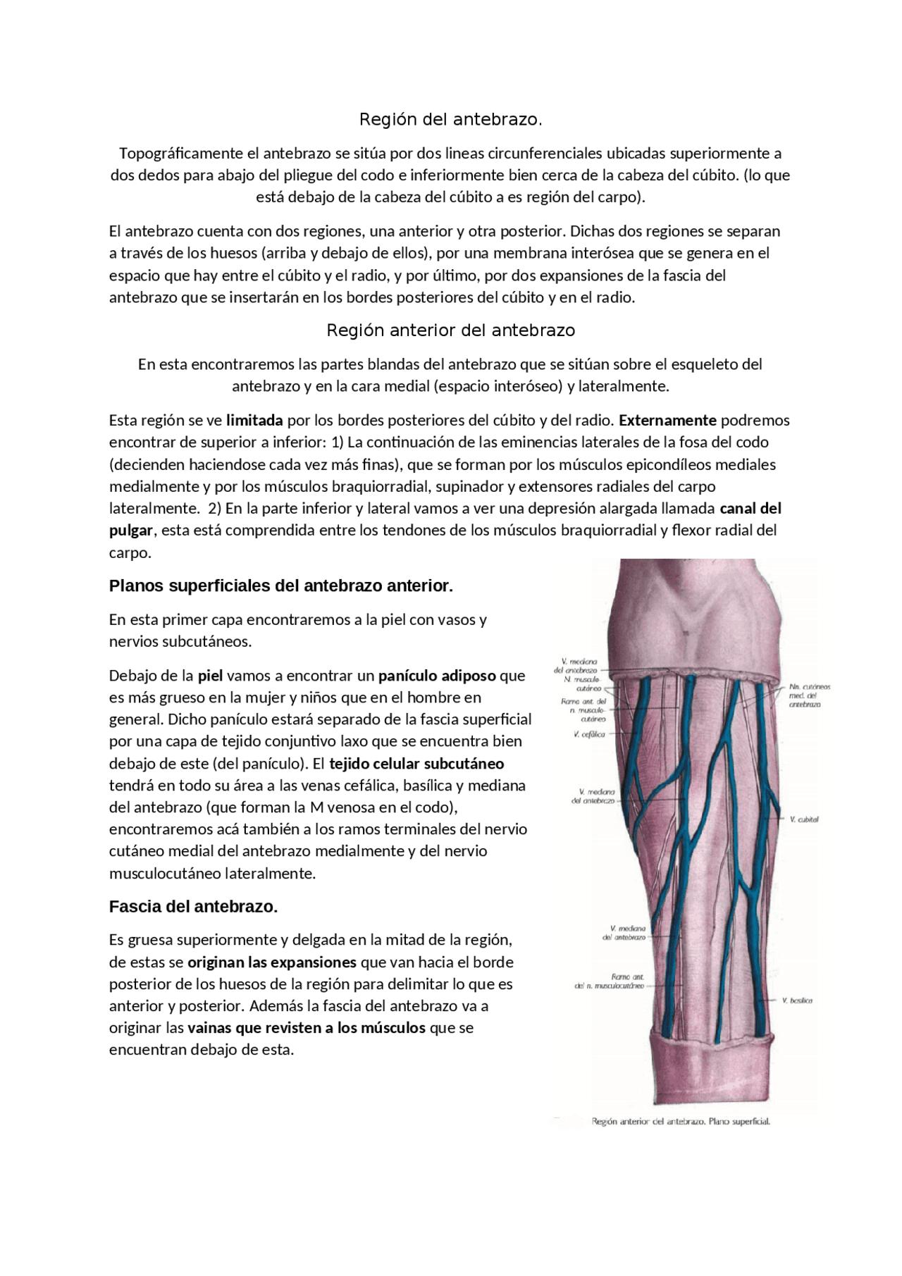 Región Del Antebrazo Posterior Y Anterior Docsity