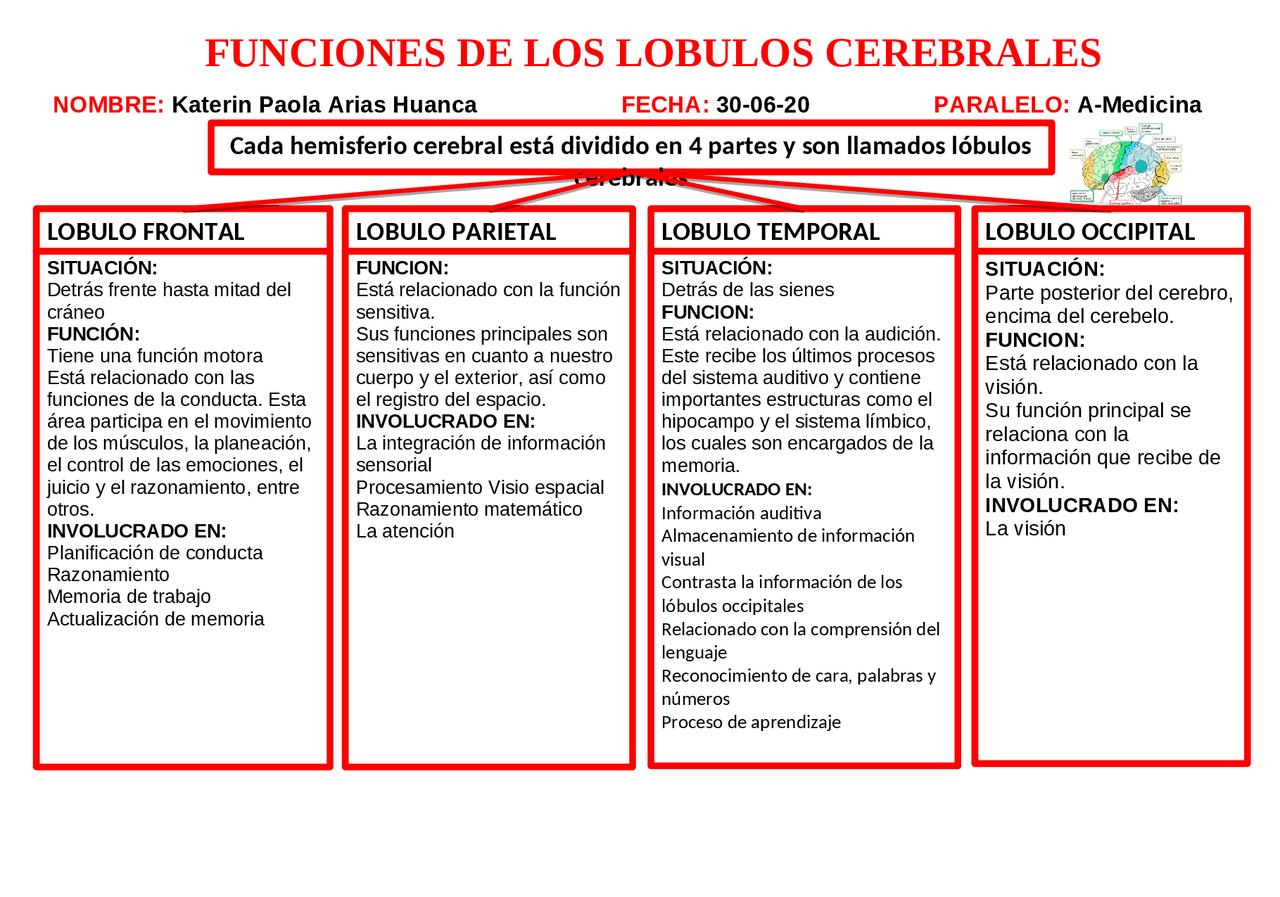Funciones De Los Lóbulos Cerebrales Docsity