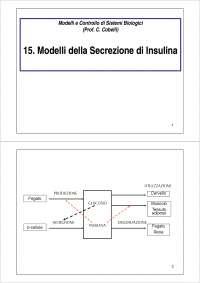 Modelli della secrezione di insulina 15