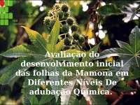 Avaliação do desenvolvimento inicial das folhas da Mamona, Notas de estudo de Química