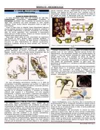 Modulo II - aula 17 - algas unicelulares, Notas de aula de Biologia Celular