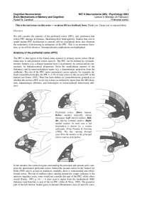 Cognitive Neuroscience-2003 Lecture Handout 06-Psychology