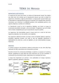 Tema 16 CORREGIDO