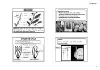 2 morfologia caule, Notas de estudo de Agronomia