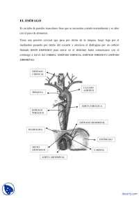Esófago - Hiato Esofágico - Apuntes - Anatomía