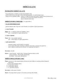 Glava i vrat-Skripta-Anatomija-Medicina