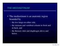 THE MEDIASTINUM-Slajdovi-Respiratorni sistem-Medicina