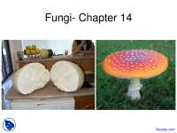 Introduction to Fungi - General Botany - Lecture Slides