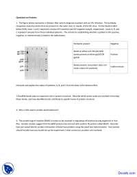 Proteins - Techniques in Molecular Biology - Quiz