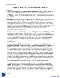 Callosobruchus Maculatus - Evolutionary Biology - Lab Handout