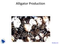 Alligator Production, Aquaculture - Animal Science - Lecture Slides