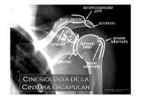 Cinesiología de la Cintura escapular