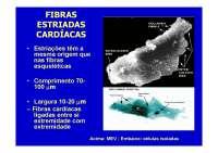 Tecido Muscular - Apostilas - Ciências Biologicas_Parte2