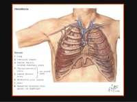Traumatismos Torácicos - Apostilas - cirurgia_Parte3