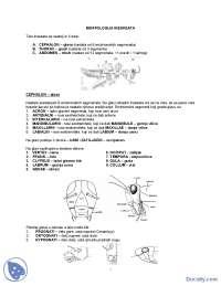 Sveska sa ilustracijama - Skripta- Entomologija- Šumarstvo