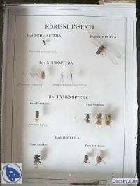 Korisni insekti -Vežbe- Entomologija- Šumarski