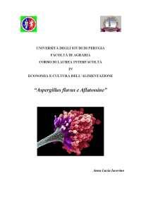 Tesina di maturità - Aspergillus flavus e aflatossine