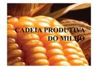 Cadeia produtiva do Milho - Apostilas - Engenhraia Agrícola