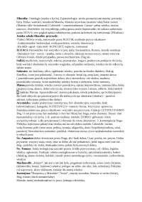 Założenia i postacie filozoficzne - Notatki - Stosunki międzynarodowe