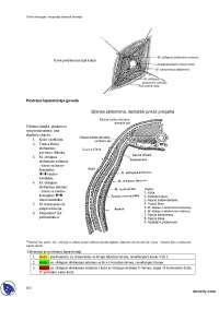 Hirurgija-Skripta-Uvod u hirurgiju i ortopediju domacih zivotinja-Veterina_5