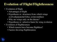 Evolution of flight, Flightlessness - Entomology - Lecture Slides