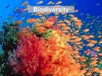 Biodiversity - Conservation Biology - Lecture Slides