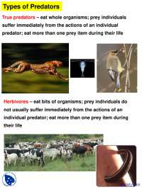 Types of Predators - Community Ecology - Lecture Slides