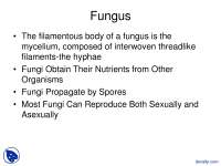 Fungus - Introductory Biology Laboratory - Lecture Slides