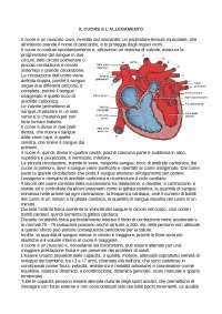 il cuore e l'allenamento