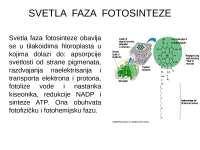 Fotosinteza - svetla faza