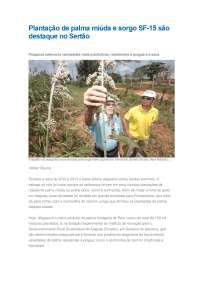 Plantação de palma miúda e sorgo SF, Notas de estudo de zootecnia