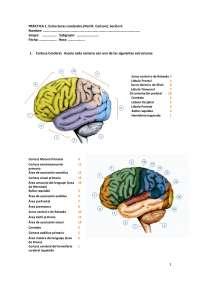 fisiologica