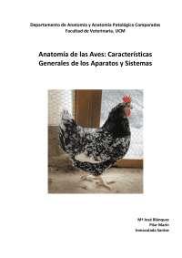 Anatomía de las Aves: características generales de los aparatos y sistemas