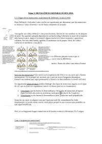 Mutagènesi i reparació del DNA
