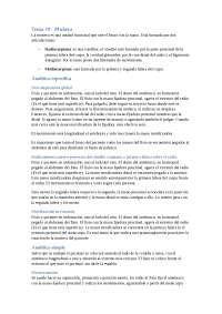 Tema 19 - Muñeca (Sin imágenes)