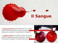 progetto di istologia, il sangue