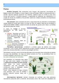 resumo biologia - plantas