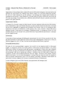 12.04.2013 urologia malattia di la peyrone prof. iaconio 4a ora