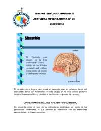 morfofisiologia humana II