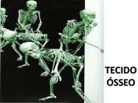 Aula 08 histologia humana tecido Ósseo