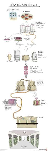 How is red wine made