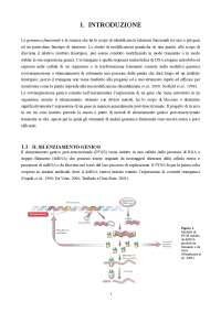 Ottimizzazione di sistemi di espressione transiente, mediati da Agrobacterium tumefaciens, in N. benthamiana e vite