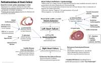 Heart Failure Pathogenesis