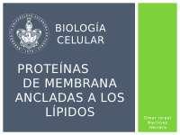 Proteínas de membrana ancladas a lípidos