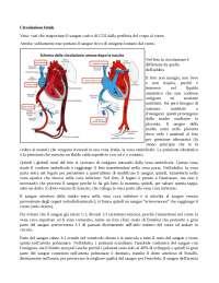 Circolazione Fetale - caratteristiche del feto