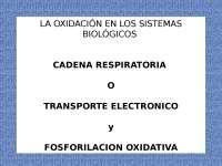 -Metabolismo celular-