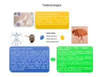 Triada ecologica yersenia pestis